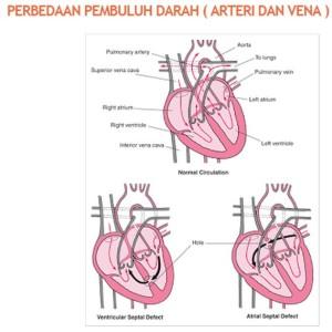 beza vena arteri 05